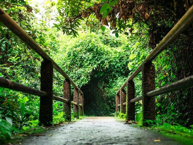 Percurso pedestre e caminho caminho, tem uma bela vegetação.