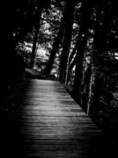 Perdido na floresta.