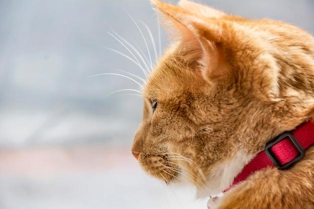 Perfil de um gato olhando pela janela.