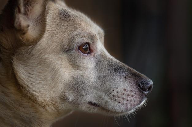 Perfil lateral de cachorro cinza.