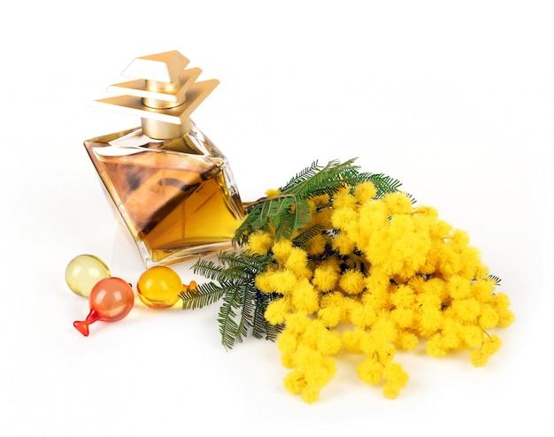 Perfume de flores de mimosa