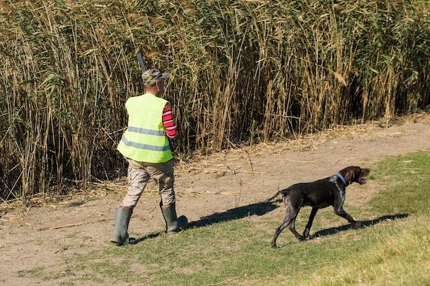 Período de caça, temporada de outono aberta. um caçador com uma arma nas mãos em roupas de caça na floresta de outono em busca de um troféu. um homem está de pé com armas e cães de caça rastreando o jogo.