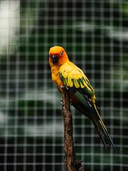Periquito colorido em um galho de árvore