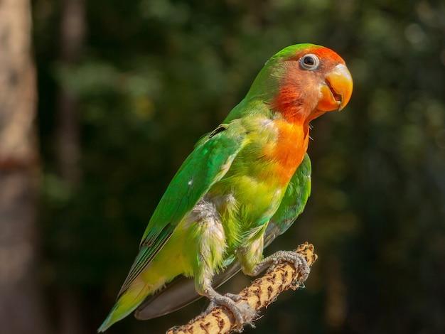 Periquito multicolorido em galho de árvore