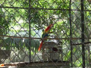 Periquito no zoológico de surabaya