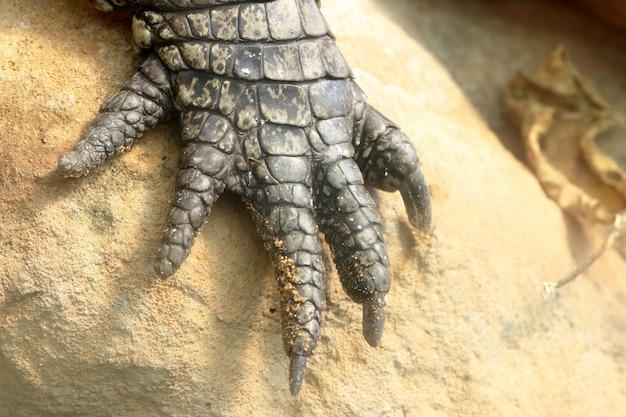 Perna de crocodilo