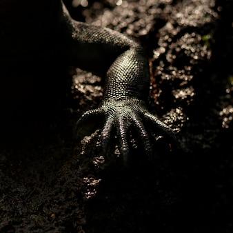 Perna, de, um, iguana marinho, (amblyrhynchus, cristatus), punta, espinoza, fernandina, ilha, ilhas galapagos, equador
