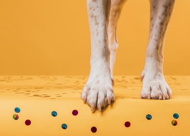 Pernas de cachorro pisando em confete