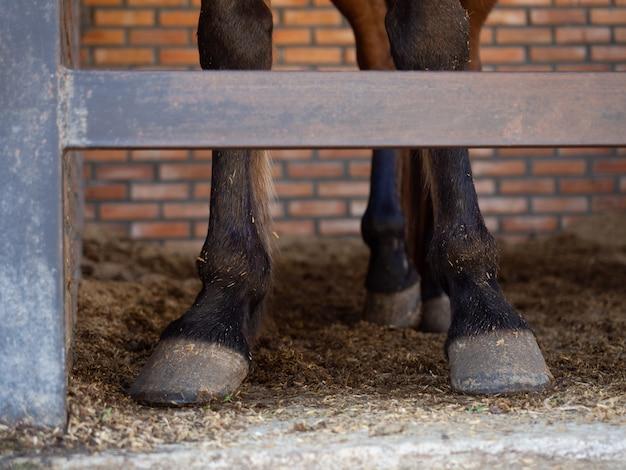 Pernas de cavalo em pé no estábulo