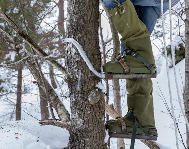 Pernas de um homem subindo em uma árvore com alpinistas nos pés. inverno.