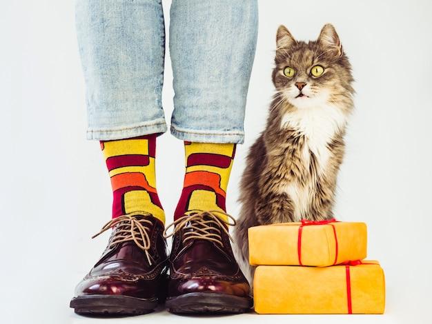 Pernas masculinas, sapatos estilosos, meias coloridas com estampa e um gatinho cinza fofinho.