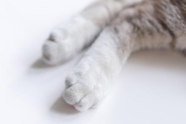 Perninhas de gato parecem fofas.