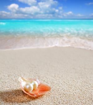 Pérola do caribe na praia de areia branca de casca tropical