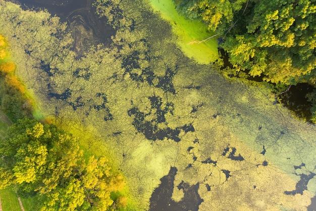 Perspectiva aérea de choupo prateado crescendo nas margens do rio em um pantanal