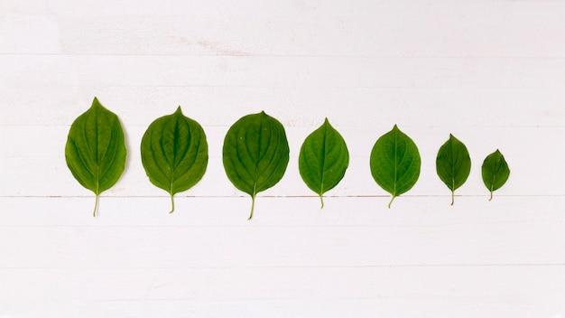 Perspectiva da floresta feita de folhas