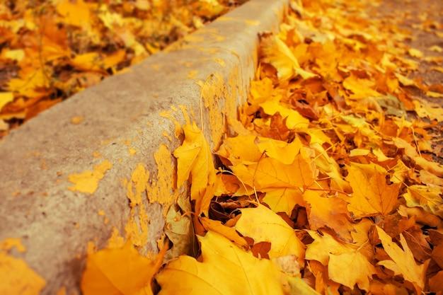 Perspectiva da fronteira entre as folhas amarelas e laranja caídas.