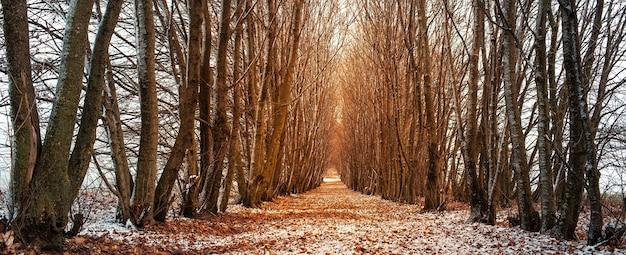 Perspectiva paisagem de caminho rodeado por árvores em dia de inverno.