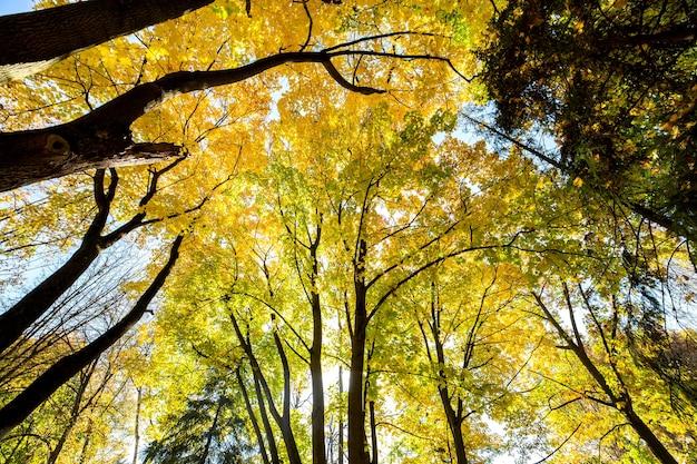 Perspectiva vista da floresta de outono com folhas brilhantes de laranja e amarelas.