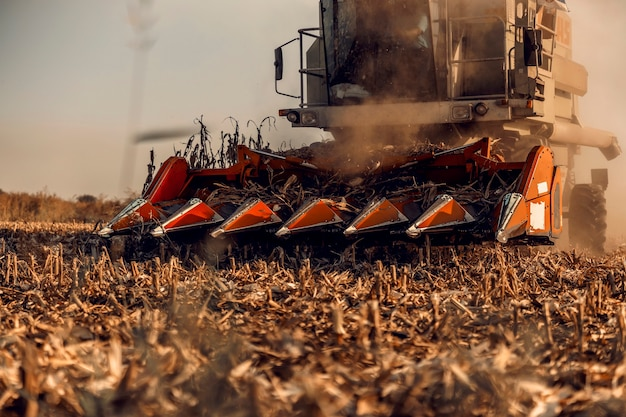 Perto da ceifeira-debulhadora de milho no campo no outono. produção e agricultura de milho.