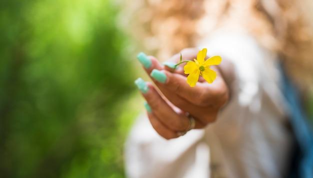 Perto da flor amarela da primavera e a mão branca da mulher segurando-a - natureza e segurança as pessoas do conceito de estilo de vida do planeta terra - fundo verde natural