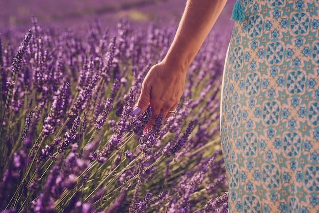 Perto da mão da mulher com a unha colorida tocando e sentindo a flor de lavanda no campo - conceito de liberdade, natureza e estilo de vida das pessoas da beleza - temporada de primavera e verão ao ar livre
