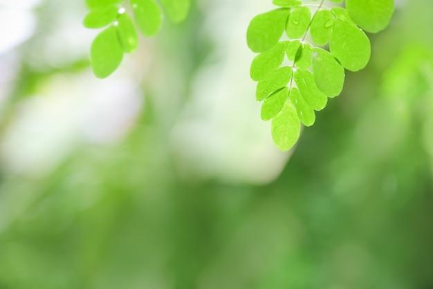 Perto da natureza vista verde folha com gota de chuva no fundo desfocado vegetação sob a luz solar com bokeh