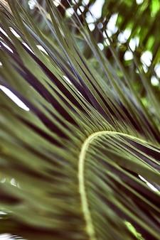 Perto das folhas de palmeira. fundo verde natural listrado abstrato. natureza