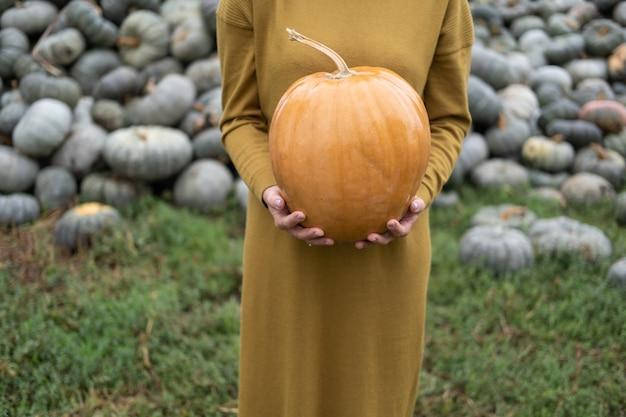Perto das mãos de mulheres segurando uma abóbora laranja na natureza, dia das bruxas ou conceito de ação de graças