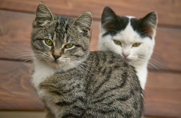 Perto de um casal de gatos ou gatinhos um atrás do outro com alto nível de detalhes.