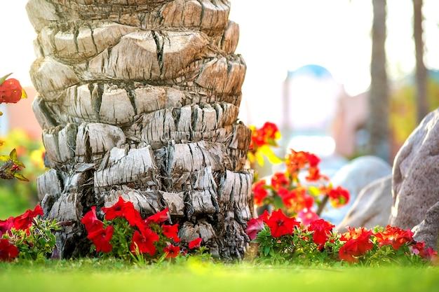 Perto de um grande tronco de uma velha palmeira crescendo na grama verde com flores vermelhas ao redor.