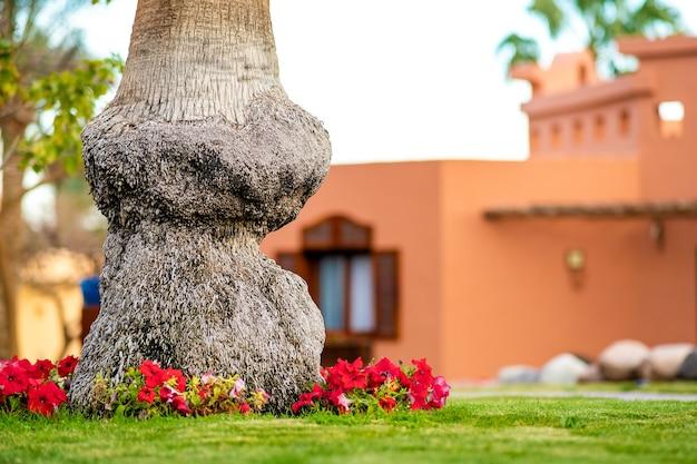 Perto de um grande tronco de uma velha palmeira crescendo no gramado verde com flores vermelhas ao redor.
