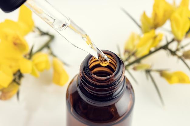 Perto de uma pipeta, garrafa âmbar e ramo de flor amarela na superfície. óleo essencial de gorse. aromaterapia com essência de ervas