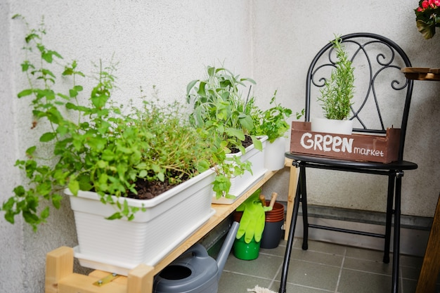 Perto do cultivo de verduras na varanda. jardinagem de passatempo em casa. zona de conforto. conceito de redução de estresse