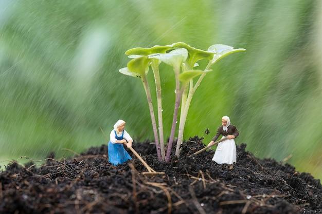 Perto do jardim em miniatura com crescimento de broto de couve no solo e trabalhando na chuva.