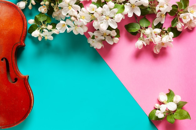 Perto do ramo da florescência da macieira e do violino em fundo de papel duotônico rosa pastel e azul claro. vista superior, close-up, copie o espaço.