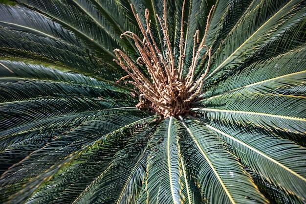 Perto dos ramos verdes de uma palmeira egípcia no jardim.