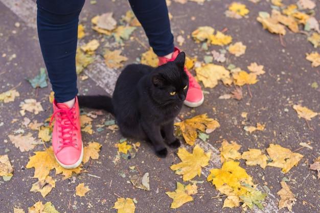 Pés femininos com tênis rosa e gato preto na natureza do outono