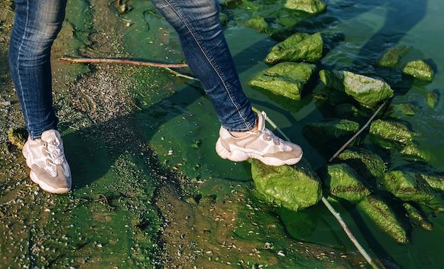 Pés nas rochas do rio com proliferação de algas, plantas aquáticas prejudiciais e meio ambiente danificado