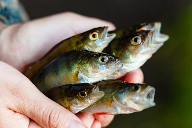 Pescador segura uma presilha nas mãos