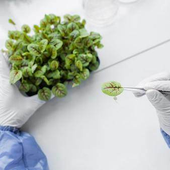 Pesquisador analisando planta no laboratório de biotecnologia