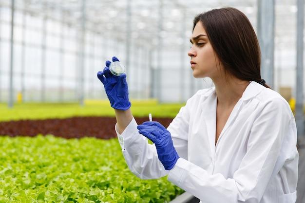 Pesquisador feminino olha uma vegetação em pé de prato de petri na estufa
