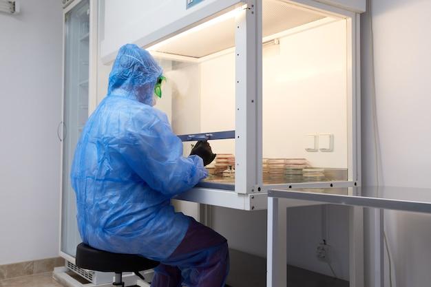 Pesquisadora científica em uniforme de proteção e equipamento trabalha com placa de petri em laboratório
