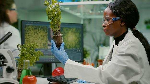 Pesquisadora observando uma muda verde em comparação com o tomate