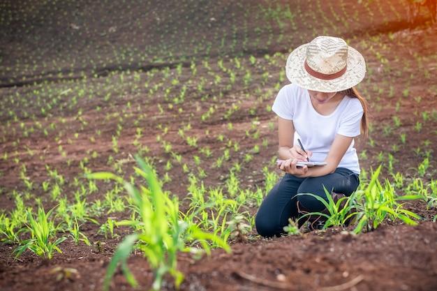 Pesquisadores de plantas de mulher bonita estão verificando e tomando notas nos campos de mudas de milho.