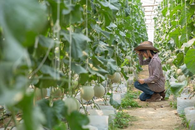 Pesquisadores de plantas estão verificando os efeitos do melão.
