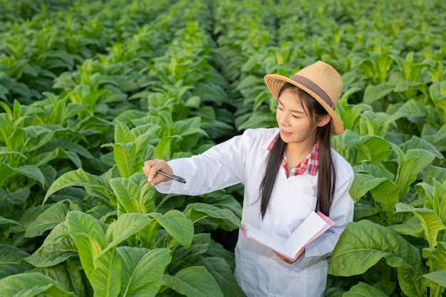 Pesquisadores do sexo feminino examinaram folhas de tabaco