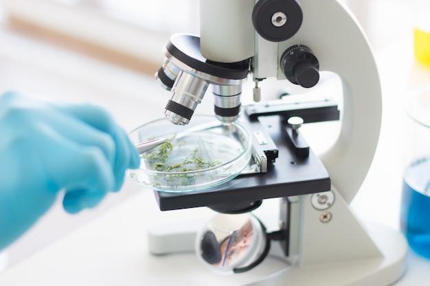 Pesquisadores usando luvas de borracha estão usando alicates e microscópios para examinar plantas medicinais em suas pesquisas para produzir medicamentos e suplementos nutricionais.