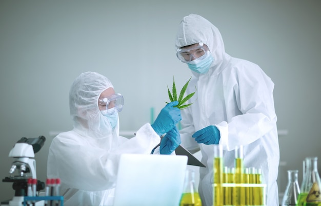 Pesquisando maconha ou cannabis em laboratórios científicos para benefícios medicinais, oil cannabis