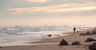 Pessoa caminhando com seus cães ao longo da costa de Hampton