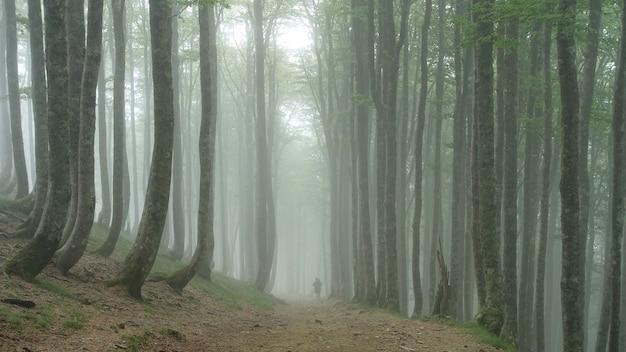 Pessoa caminhando por uma floresta coberta de árvores e névoa